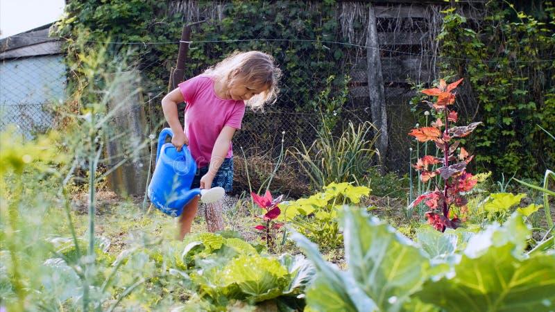 Het meisje geeft kool van gieter in de moestuin water stock afbeeldingen