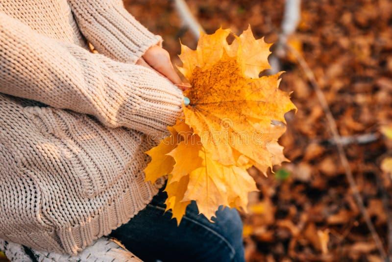 Het meisje houdt de herfstbladeren op de achtergrond van bos stock foto's