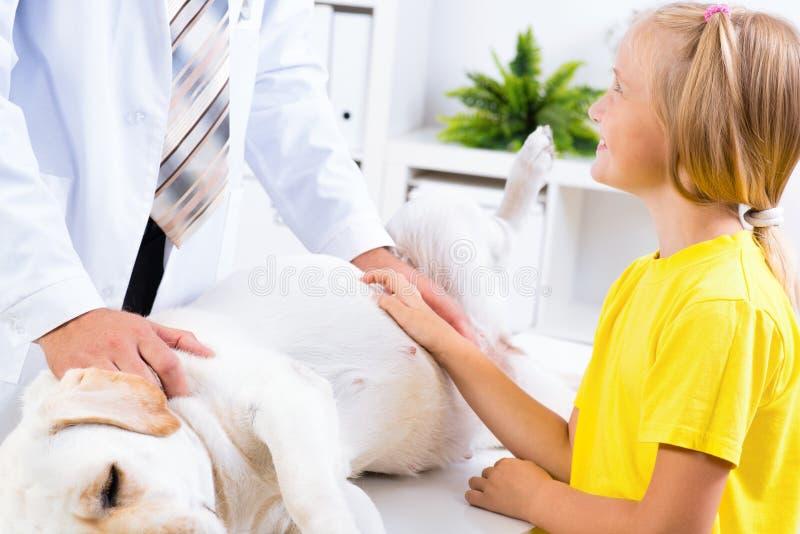 Het meisje houdt een hond in een veterinaire kliniek stock fotografie
