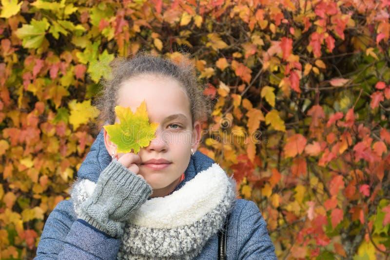 Het meisje houdt in haar hand een esdoornblad die zich op de achtergrond van de herfstbladeren bevinden royalty-vrije stock afbeeldingen