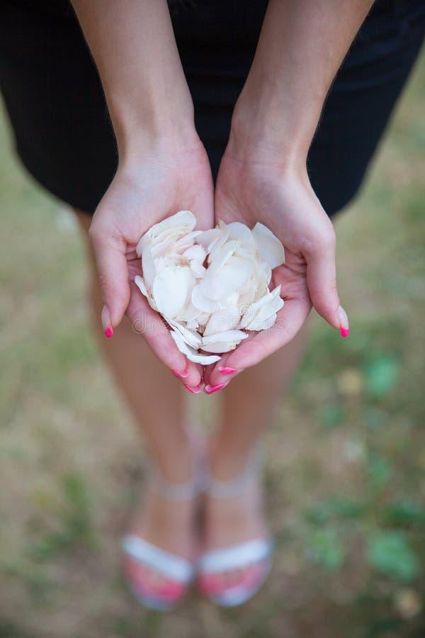Het meisje houdt witte bloemblaadjes van bloemen stock afbeelding