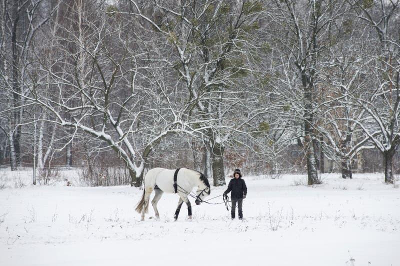 Het meisje leidt een paard in de winter op royalty-vrije stock foto's