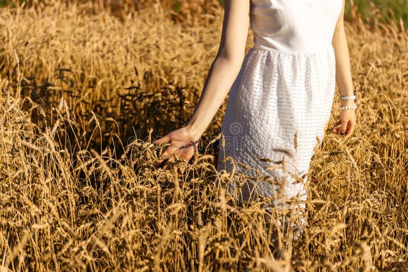 Het meisje loopt langs het tarwegebied, wat betreft de oren met de hand royalty-vrije stock fotografie