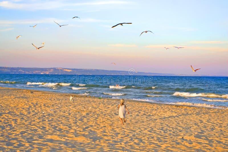 Het meisje loopt om de terriër van Russell van de puppyhefboom op een groot zandig strand te ontmoeten die met zeemeeuwen in de  stock afbeeldingen