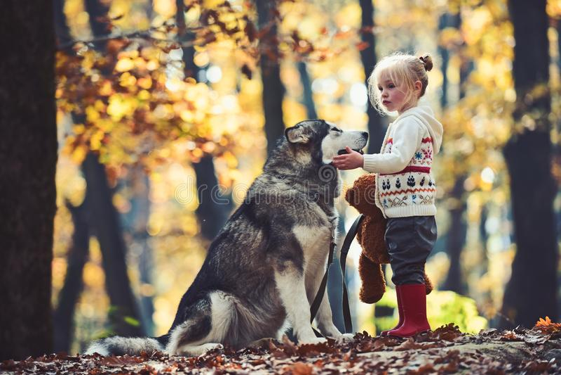 Het meisje met hond in de herfst bosactiviteit en het actieve rust Kind spelen met schor en teddybeer op verse lucht royalty-vrije stock afbeeldingen