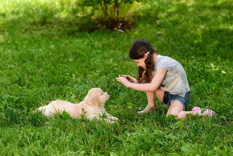 Het meisje neemt foto van hond stock afbeeldingen