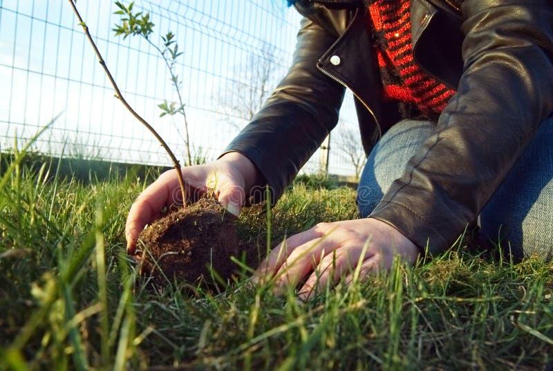 Het meisje plant een jonge boom stock foto