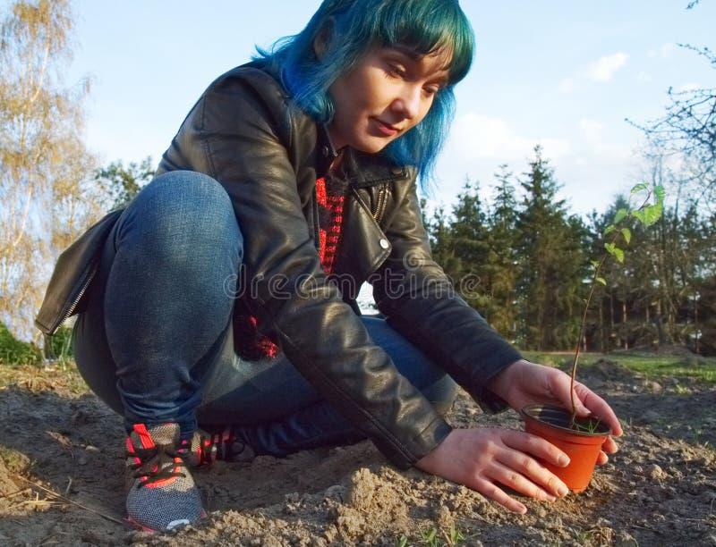 Het meisje plant een jonge boom stock fotografie