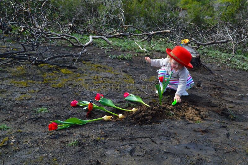 Het meisje plant tulpen over gebrande grond stock fotografie