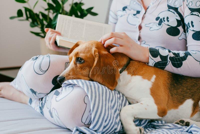 Het meisje in pyjama's leest thuis een boek met een hond van het brakpuppy De brak is leugens op meisjes` s knieën stock fotografie
