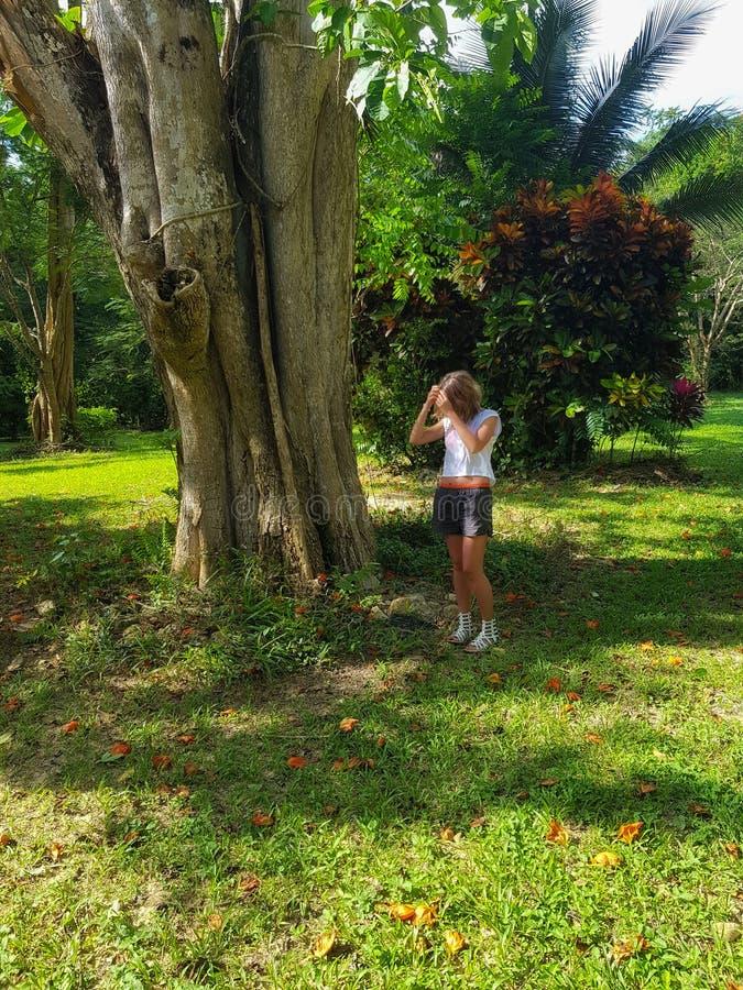 Het meisje raakt een grote boom in een park in Jamaïca royalty-vrije stock foto's