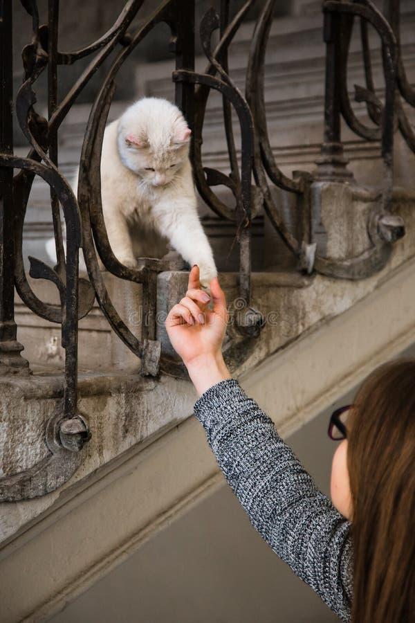Het meisje speelt met een kat stock foto
