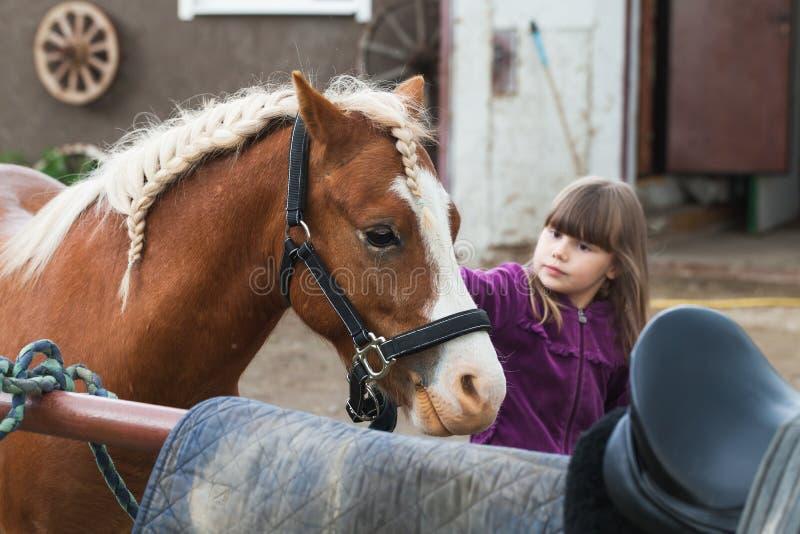 Het meisje strijkt bruin paard met gevlechte manen royalty-vrije stock afbeelding