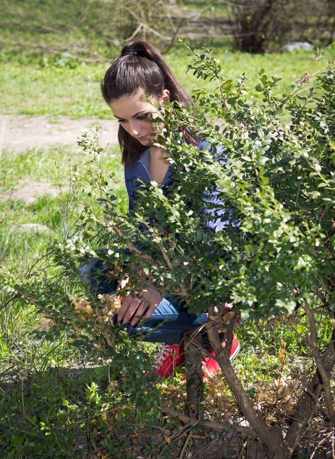 Het meisje in tuin maakt struik schoon stock afbeelding