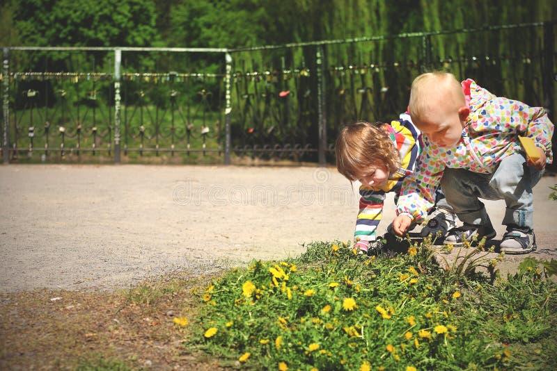 Het meisje van de kinderenjongen over bloempaardebloem die samen wordt gebogen stock foto's