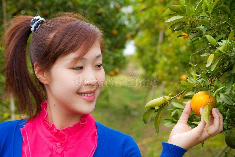 Het meisje van de tuinman in oranje tuin, het noorden van Thailand royalty-vrije stock afbeelding