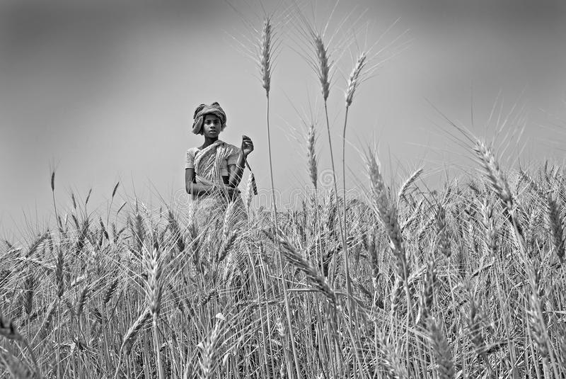 Het meisje van het dorp op een gebied stock fotografie