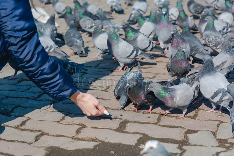 Het meisje voedt duiven royalty-vrije stock foto