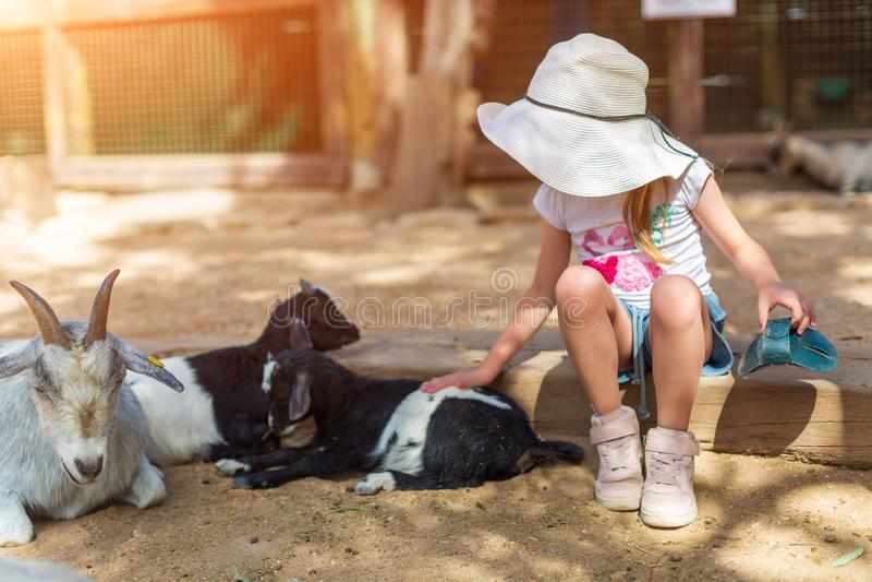 Het meisje voedt een geit bij een petting dierentuin van kinderen royalty-vrije stock afbeelding