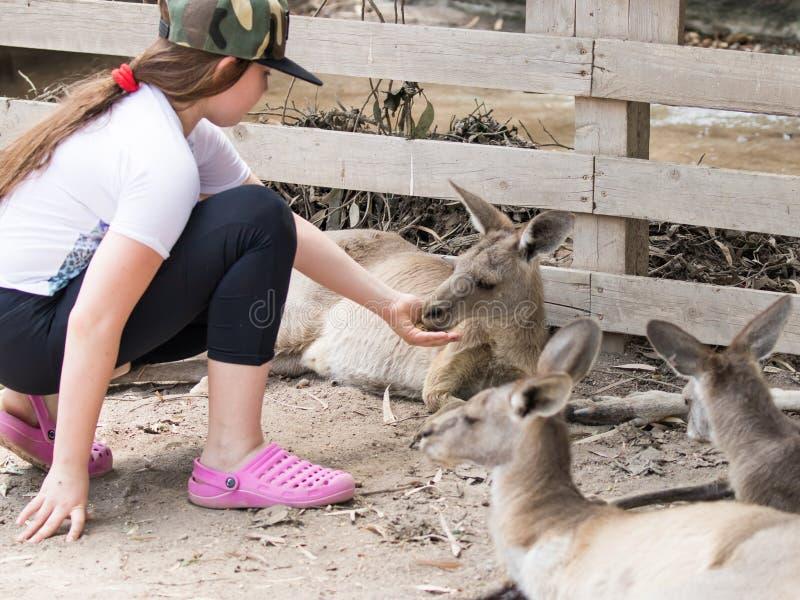 Het meisje voedt een kangoeroe bij de Australische Dierentuin Gan Guru in Kibboetsen Nir David, in Israël stock fotografie