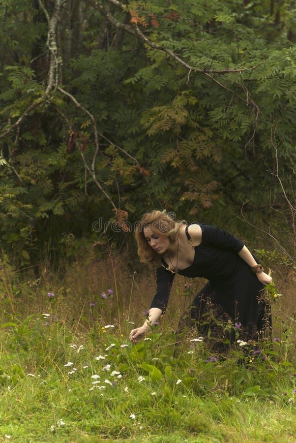 Het meisje in zwarte kleding verzamelt kruiden royalty-vrije stock foto's