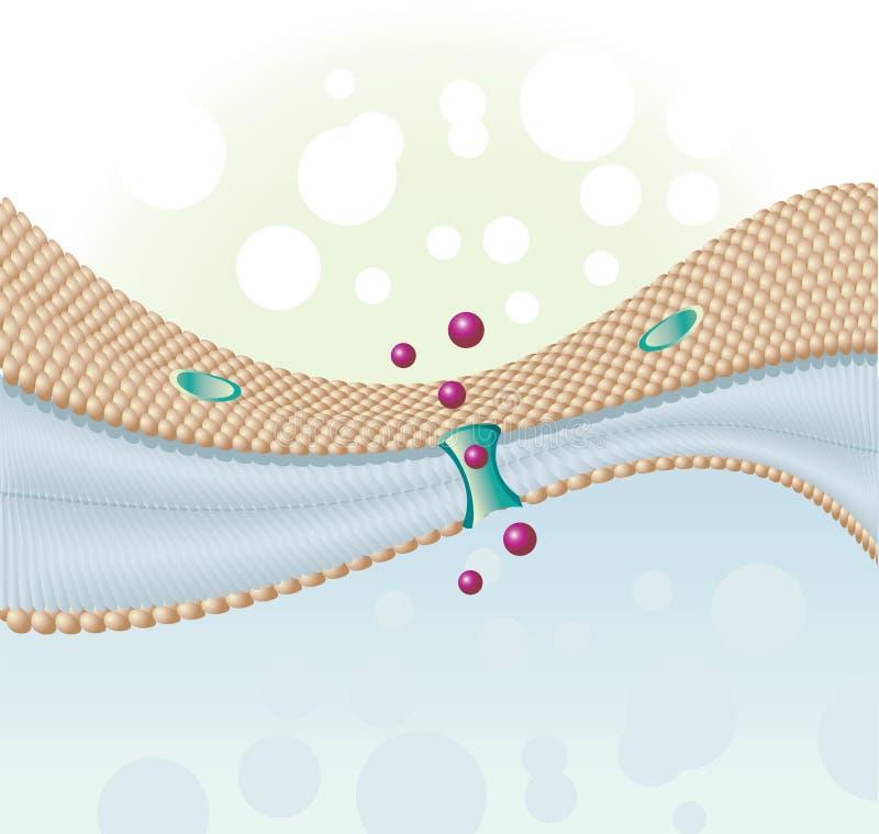 Het membraan van de cel vector illustratie
