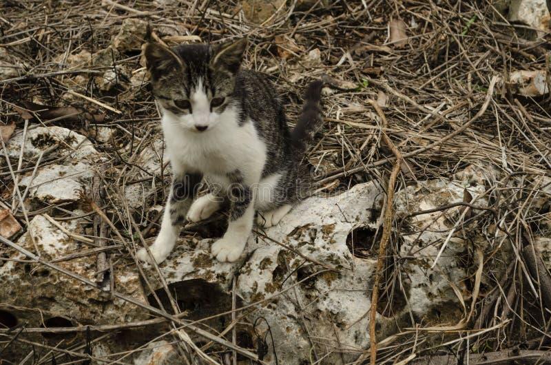 Het Mengsel van de kat met Omgeving royalty-vrije stock afbeelding