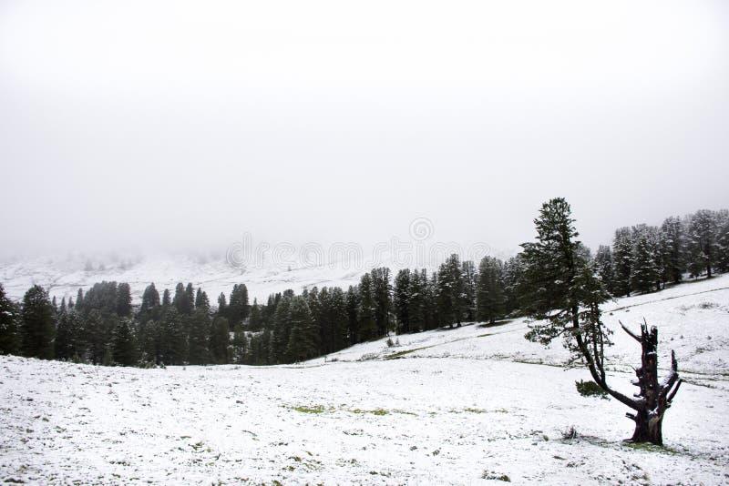 Het meningslandschap snView modelleert sneeuw sneeuwen behandeld op alpiene boom boven berg in Kaunergrat-aardpark stock afbeelding