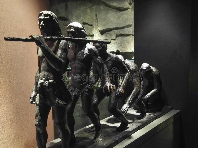 Het menselijke beeldhouwwerk van het evolutiekoper royalty-vrije stock afbeelding
