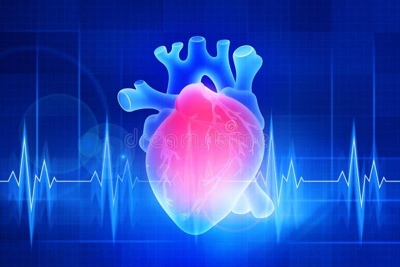 Het menselijke hart Digitale illustratie op een blauwe achtergrond stock illustratie