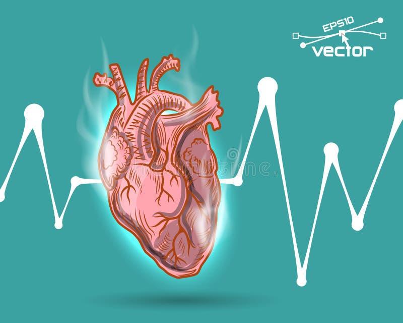 Het menselijke hart sloeg vector illustratie