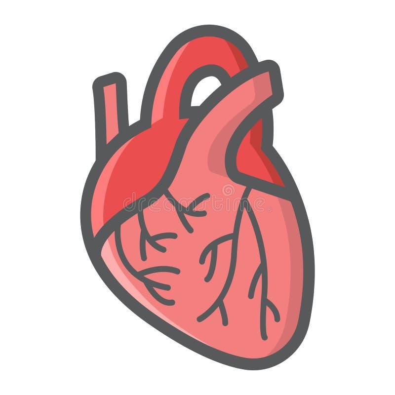 Het menselijke hart vulde overzichtspictogram, geneeskunde vector illustratie
