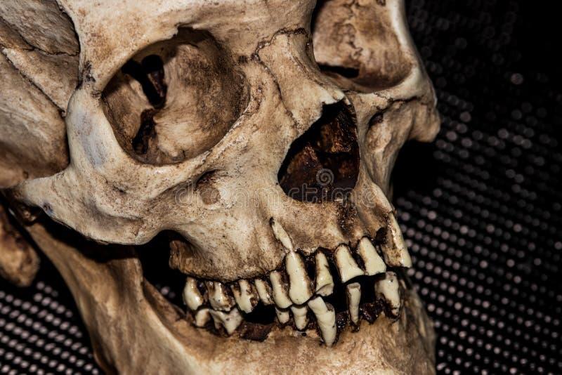 Het menselijke hoofd van de skeletschedel op zwarte royalty-vrije stock foto