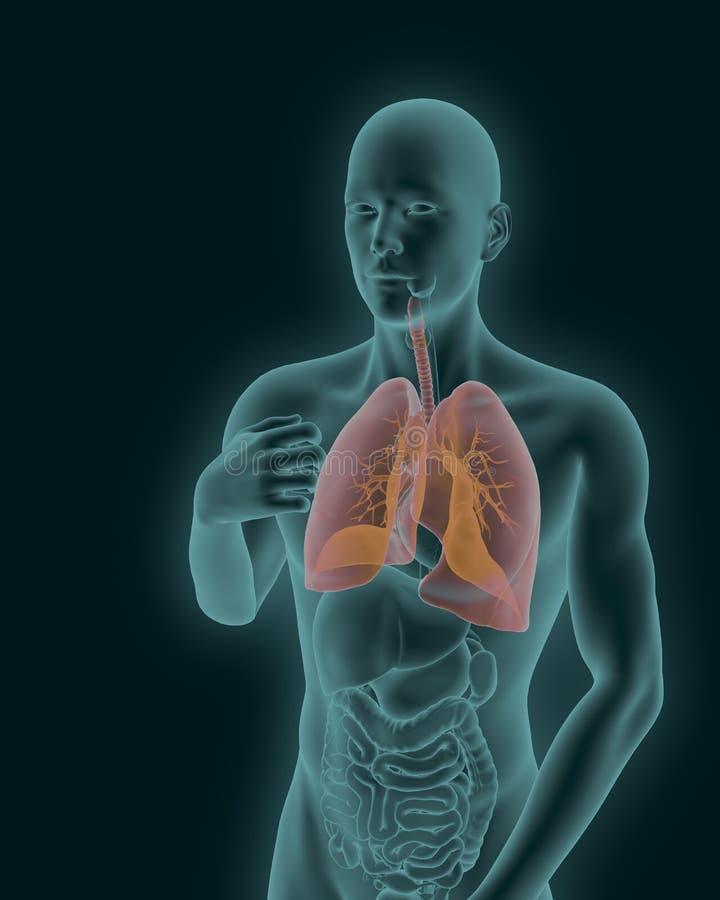Het menselijke lichaam met zichtbaar ontstoken ademhalings 3d systeem geeft terug vector illustratie