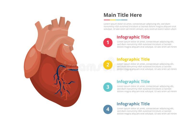 Het menselijke malplaatje van hartinfographics met 4 punten van de beschrijving van de beschikbare ruimtetekst - vectorillustrati royalty-vrije illustratie