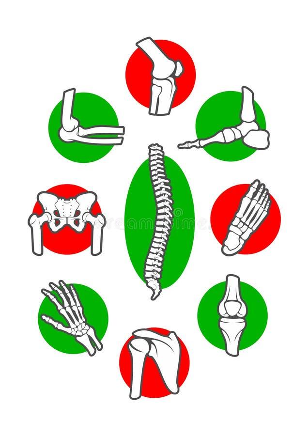 Het menselijke skelet beent en verbindt pictogramreeks uit vector illustratie