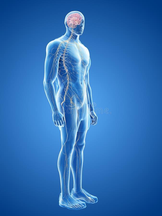 Het menselijke zenuwstelsel stock illustratie