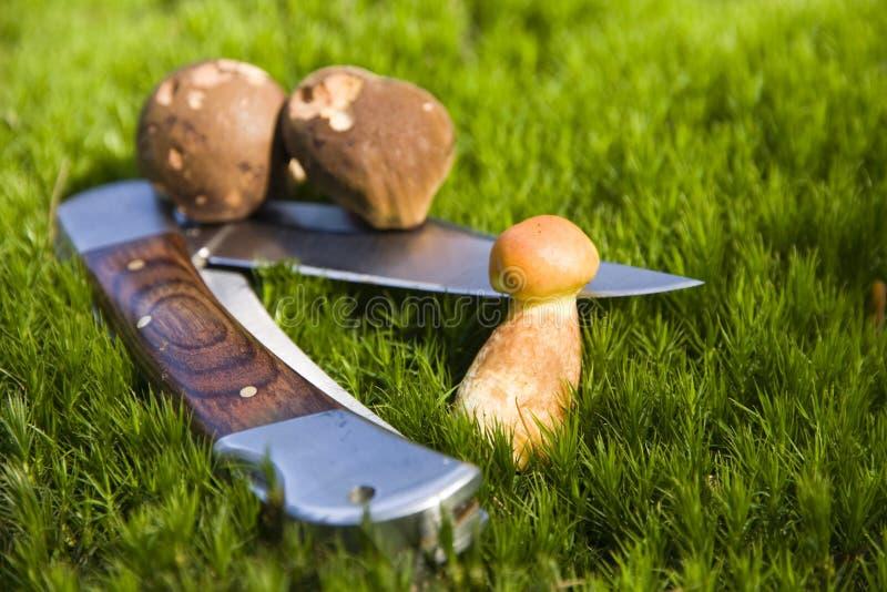 Het mes van de paddestoel stock fotografie