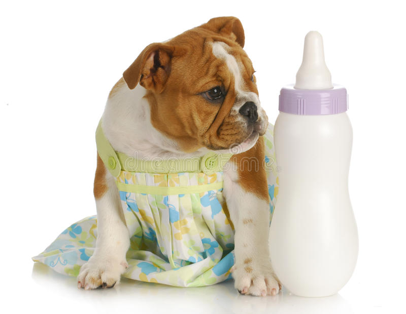 Het met de fles grootbrengen van puppy stock afbeelding