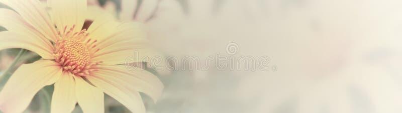 Het Mexicaanse Onkruid van de Zonnebloem royalty-vrije stock foto