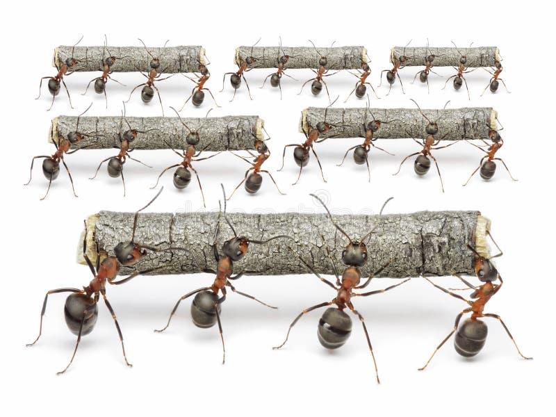 Het mierenwerk met logboeken, groepswerkconcept royalty-vrije stock foto's