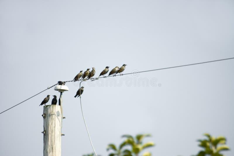 Download Het migreren van vogels stock foto. Afbeelding bestaande uit kabels - 283280