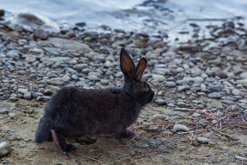 Het miniatuurkonijn weiden op aard royalty-vrije stock fotografie