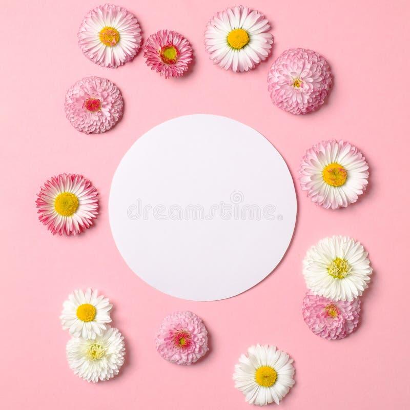 Het minimale concept van de de lenteaard Daisy bloemen en witte cirkel-vormige document kaart op pastelkleur roze achtergrond Vla stock foto