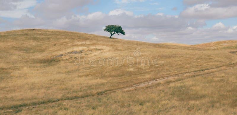 Het minimalistische panorama van een rollend heuvelig geploegd gebied met solitaire suber cork eiken boom, Quercus Suber, ving bi stock foto