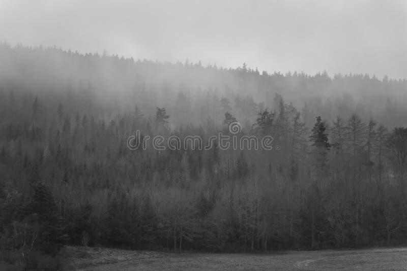 Het mistige bos royalty-vrije stock fotografie