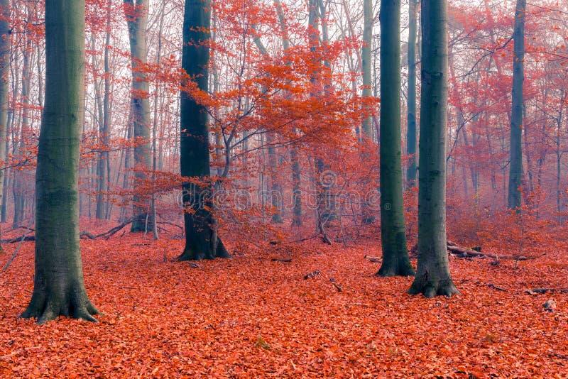 Het mistige Bos van de Herfst stock fotografie