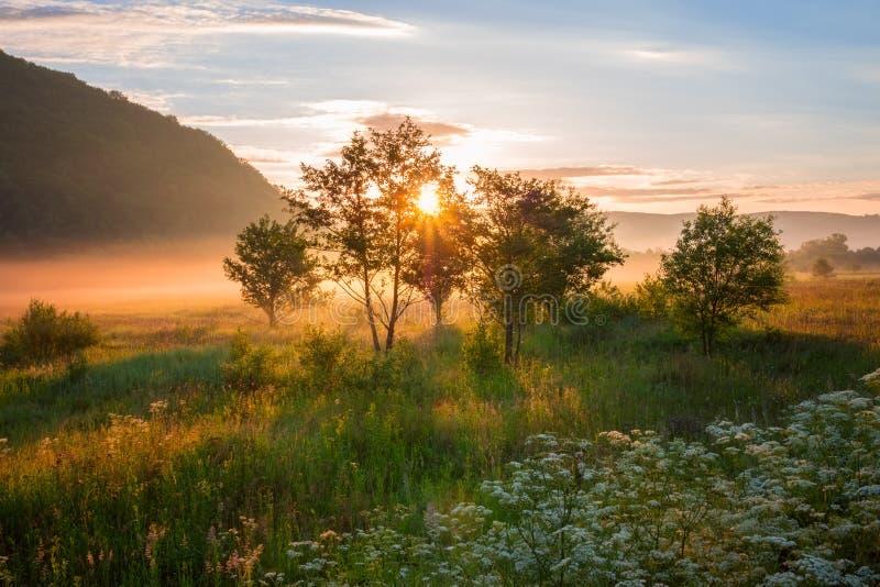 Het mistige de zomerlandschap, zon neemt over de gouden zonnige met dauw bedekte weide toe royalty-vrije stock foto