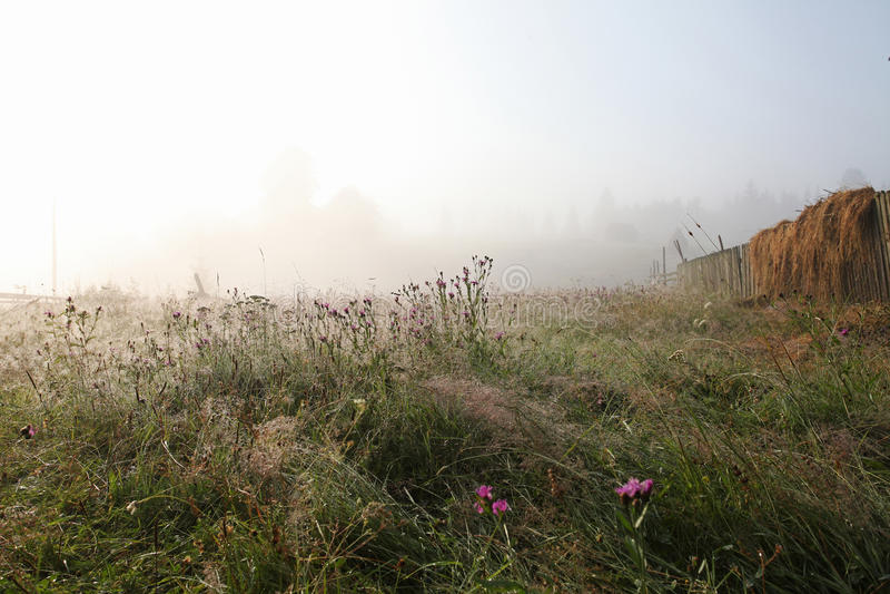 Het mistige gras van het ochtendhooi in plattelandsdorp stock fotografie