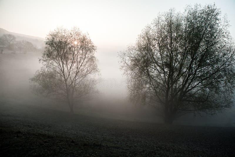 Het mistige landschap van de ochtendzomer met rij van bomen Nevelige ochtend in het bos Mooie Aard Wilde Landschap stock fotografie